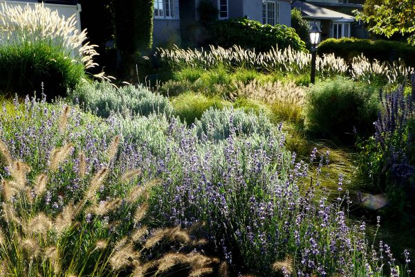 gorgeous-Angeles-Times-Meadow-Garden-sustainable-Oudolf-landscaping-Magazine-Water-grass-InSite-Landscape-Design-600x400