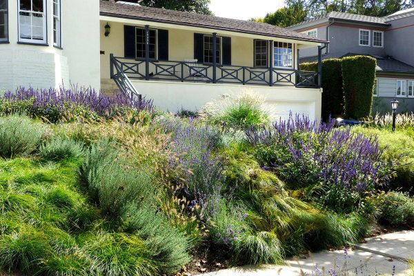 gorgeous-Angeles-Times-Urban-Meadow-Garden-sustainable-Oudolf-Drought-Yard-Garden-home-landscaping-Jonathan-Harnish-Insite-grasses-InSite-Landscape-Design-600x400