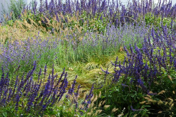 monet-impressionist-painting-Meadow-Garden-sustainable-Oudolf-Drought-water-Home-Yard-landscaping-InSite-Landscape-Design-600x400