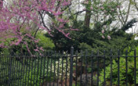 Banford Weissmann/Banford Landscapes LLC – Urban Woodland