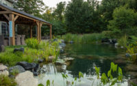 Larry Carnes/Reflections Water Gardens – Pond Life Calling